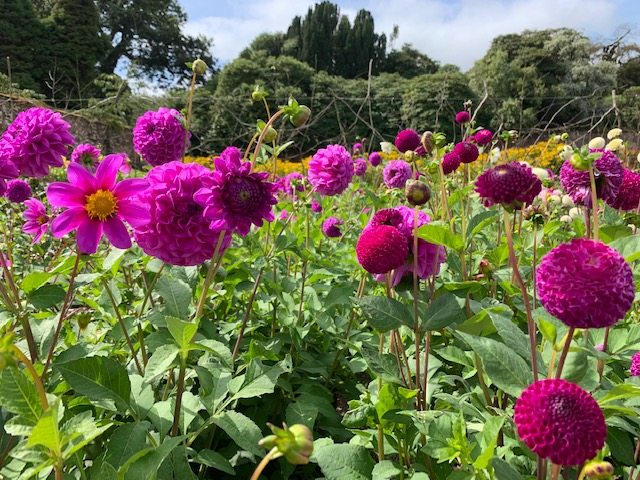 Family visit to the lost gardens of heligan